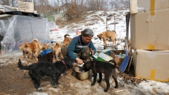 Korean Woman Saves 200 Pups From Becoming Dinner