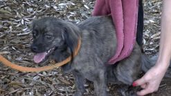 Paralyzed Dog Left at Florida Shelter With Note