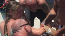 Woman Bitten by Nurse Shark Leaves Hospital