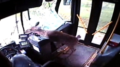 Deer Crashes Through Bus Windshield, Walks Out Door