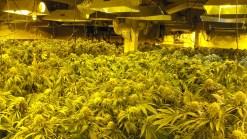 Gilroy Furniture & More Owner Ran Marijuana-Growing Operation in Back Room: Sheriff