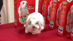 Texas Rabbit New Face of Trix Cereal