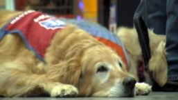 Texas Veteran Lands Civilian Job With Service Dog