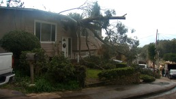 80-Foot Eucalyptus Tree Crashes Down Onto Pacifica Home During Storm