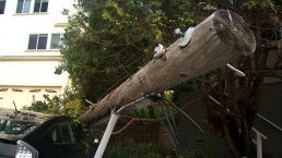 80-Foot Eucalyptus Tree Crashes Into Pacifica Home
