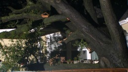 Tree Crashes into Vallejo Home