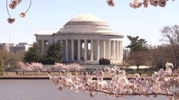 5 Ways Climate Change is Affecting DC
