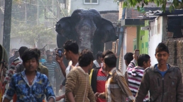 People Flee As Elephant Runs Through Town, Smashes Homes