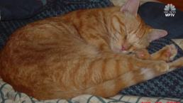 Tabby Lost Since 2004 Returns to Owner 14 Years Later