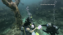 Miami Couple Takes the Plunge and Weds Underwater