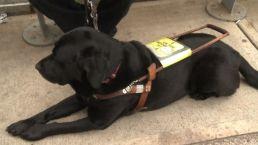 Blind Man Alleges Uber Discrimination Over Service Dog