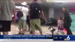 Passenger Punches Service Dog and Pregnant Woman