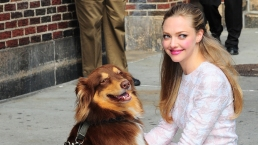 Celebrities and Their Rescue Dogs
