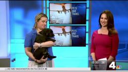Tips for Traveling on a Plane With Your Pet