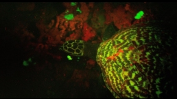 First Glow-in-the-Dark Sea Turtle Found