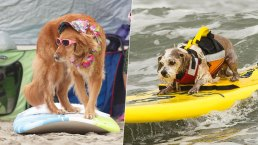 Hang 20: Dogs Ride Pacifica Waves in Annual Surfing Contest