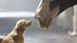 Wholesome, Less Racy Super Bowl Ads Expected