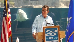 Beluga Whale Photobombs Governor of Connecticut