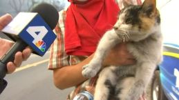 'I Found a Little Kitty': Cat Rescued During Ventura Wildfire