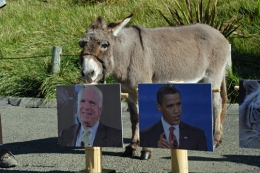 An Ass Picks McCain and an Elephant Leans Obama