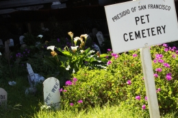Images of the Presidio Pet Cemetery