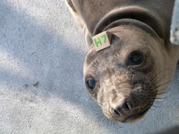 'Leave Seals Be This Pupping Season:' The Marine Mammal Center Reminds Visitors