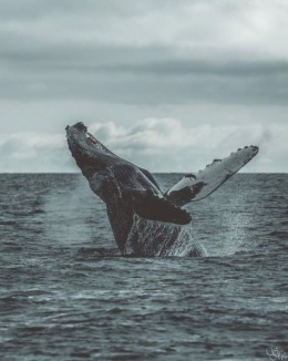 Whale Watching at a Peak in Monterey Bay