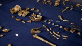 Human Ancestor Naledi Was Handy With Tools: Scientists