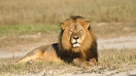 U.S. Philanthropists to Offer Backing for Oxford Lion Project