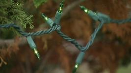 Conn. City Blames Squirrels for Christmas Tree Snafu
