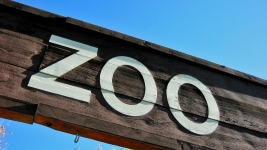 Man Who Jumped Fence to Pet Zoo Cougars Sentenced