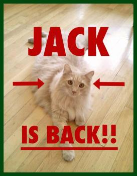 FB Viral Sensation 'Jack the Cat' Found at JFK