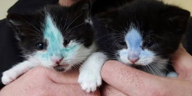 Colored-in Kittens Get Sudsy Baths to Wash Away Ink