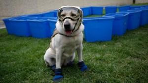 'Her Bark Always Gave Hope': Mexican Rescue Dog Frida Retires