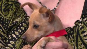 Clear the Shelters: 'Laura Garcia' the Dog Up for Adoption