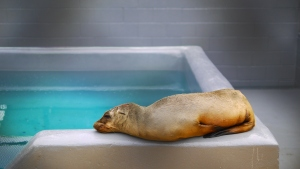 PHOTOS: Bay Area's Marine Mammal Center Cares for Sick Sea Lions, Seals