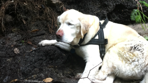 Lost Blind Dog Survives Eight Days in Santa Cruz Mountains