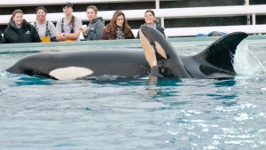 OSHA Fines SeaWorld For Allowing Trainers to Swim in Medical Pool