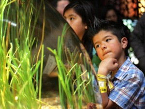 Día del Niño at Monterey Bay Aquarium