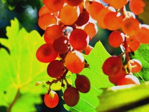 Madera Wine Trail's Wine & Chocolate Weekend