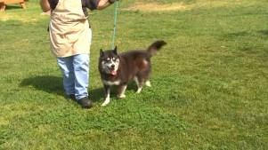 Husky Who Went Missing in 2013 Reunites With Owner
