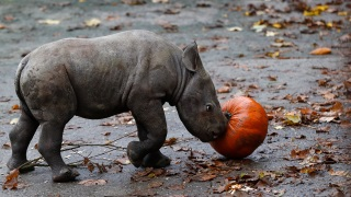 Adorable Zoo Babies: Baby Rhino