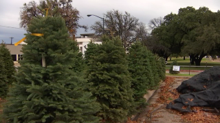Christmas Tree Recycling Program Launches in San Francisco