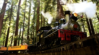 8 Passengers Injured Aboard Roaring Camp Railroads Train in Felton