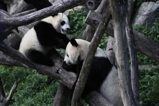 Adorable Zoo Babies