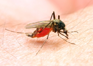Mosquito Fogging in Redwood City After West Nile Detected