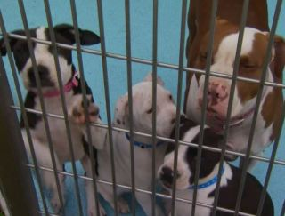 Crowded Animal Shelters in Contra Costa County Prompt Temporary Surrender Restriction