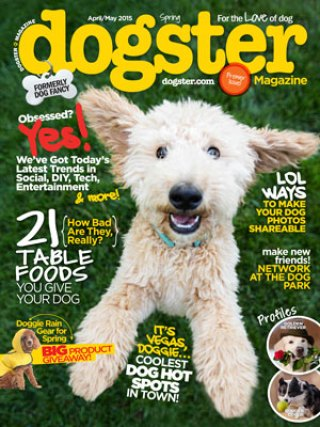 As One Local Magazine Folds, Another Launches