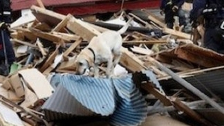 SJ Rescue Dog Uses Tools Japan