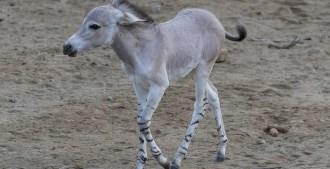 New Bundles of Animal Joy Arrive in San Diego